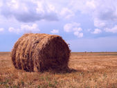 Single haycock on a field — Stock Photo