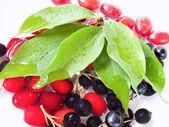 Cornelian cherry and black currant — Stock Photo
