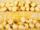 Corn in a cobs and popcorn — Stock Photo
