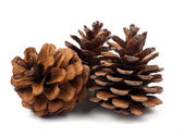 Fir cones — Stock Photo