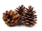 Fir cones — Stock Photo