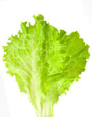 Lettuce leaf — Stockfoto
