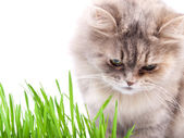 Cat and grass — Stock Photo