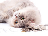 Cat and heap of coins — Stock Photo