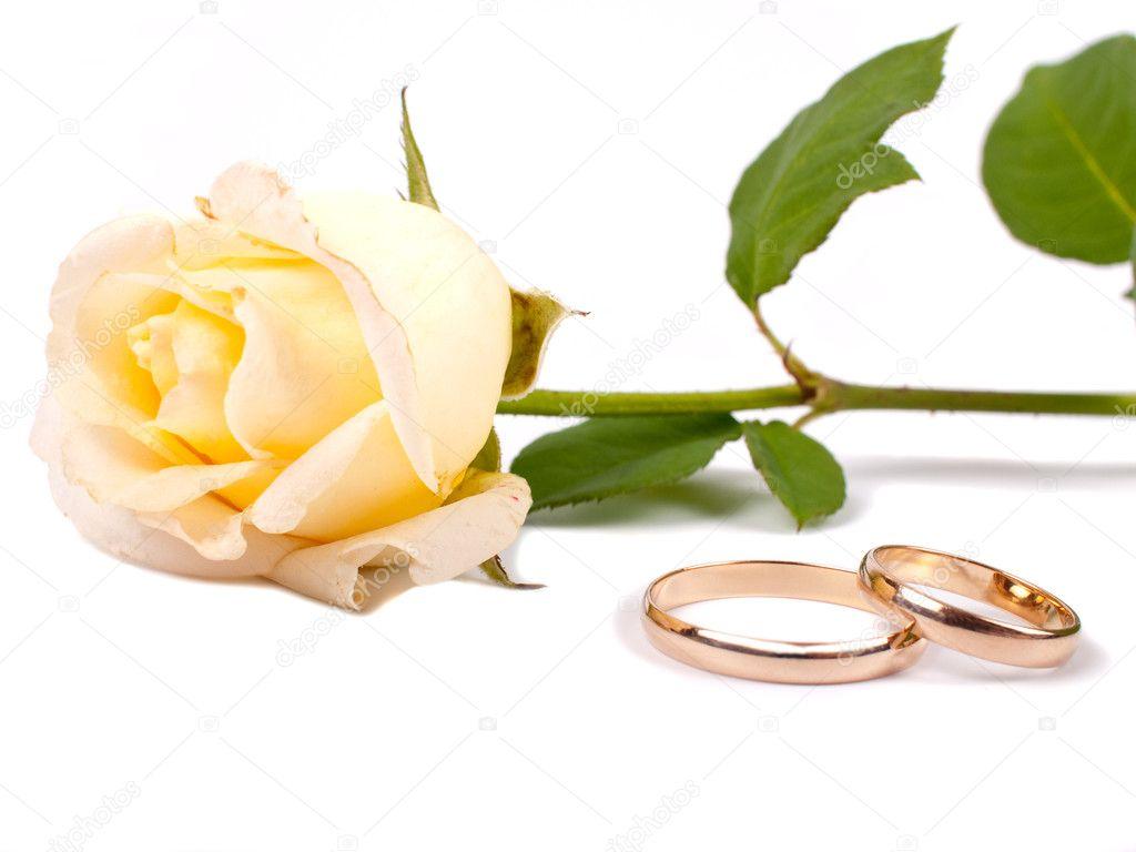rose und hochzeit ringe stockfoto 1178810. Black Bedroom Furniture Sets. Home Design Ideas