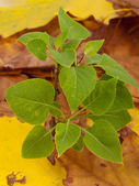 Green plant above autumn leaves — Stock Photo