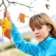 Last autumn leaves — Stock Photo