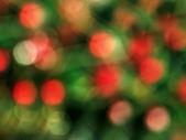 Nový rok boke — Stock fotografie