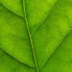 Green leaf 2 — Stock Photo