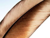 Birds feather — Stock Photo