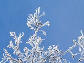 Hoar-frost 2 — Stock Photo