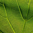 Green leaf 4 — Stock Photo #1226084