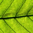 Light-green leaf — Stock Photo