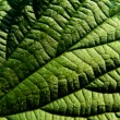 Leaf of the nettle 2 — Stock Photo