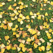Yellow leaves on grass — Stock Photo
