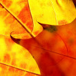 Orange and red leaves like flame — Stock Photo #1243086