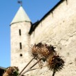 Stock Photo: Dry thistle