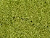 Algaes — Stock Photo