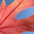Red leaf 2 — Stock Photo