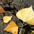 Royalty-Free Stock Photo: Yellow leaves 2
