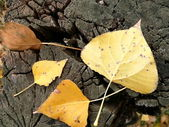 Yellow leaves 2 — Stock Photo