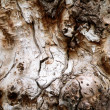 Royalty-Free Stock Photo: Bark of the old tree 2