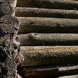 Log wall — Stock Photo