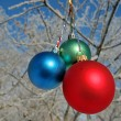 Three colour balls on a tree - Zdjęcie stockowe