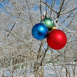 Stok fotoğraf: Three Balls on branch of tree