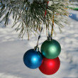 Three colour balls on a pines branch - Stockfoto