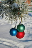 Three colour balls on a pines branch — Stock Photo
