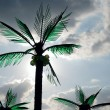 Stock Photo: Palms