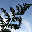 Stock Photo: Branch of fern