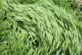 Wind on green grass 2 — Stock Photo