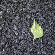 Green leaf on asphalt — Stock Photo