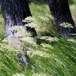 Wind on the green grass - Stock Photo
