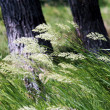 Wind on the green grass — Stockfoto