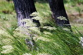 Wind on the green grass — Stock Photo