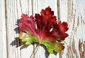 Red-green leaf 3 — Stock Photo