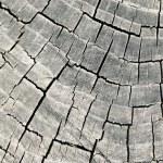 Old saw cut — Stock Photo #2100806