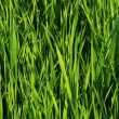 green gras — Stockfoto #2213201