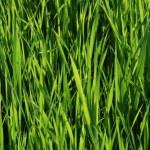 grönt gräs — Stockfoto