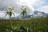 Kır çiçekleri dağ zemin üzerine — Stok fotoğraf