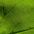 Green leaf 5 — Stock Photo
