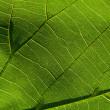 Green leaf 5 — Stock Photo