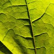 Green leaf close-up — Stock Photo #2422095