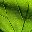 Green leaf 6 — Stock Photo