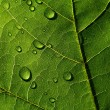 Stock Photo: Dark-green leaf with drops of the rain