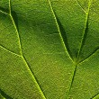 Green leaf 4 — Stock Photo