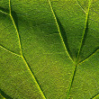 Green leaf 4 — Stock Photo #2499670